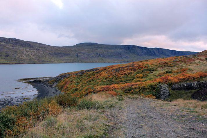 Úr Teigsskógi við Þorskafjörð. Með þeirri veglínu færist Vestfjarðavegur af tveimur hálsum, Hjallahálsi og Ódrjúgshálsi, og liggur í staðinn um láglendi.
