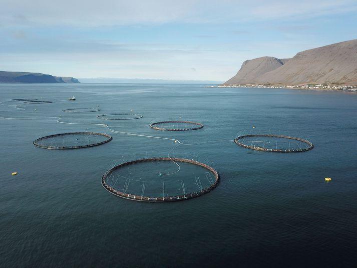 Frumvarp um fiskeldi er nú til umfjöllunar á Alþingi.