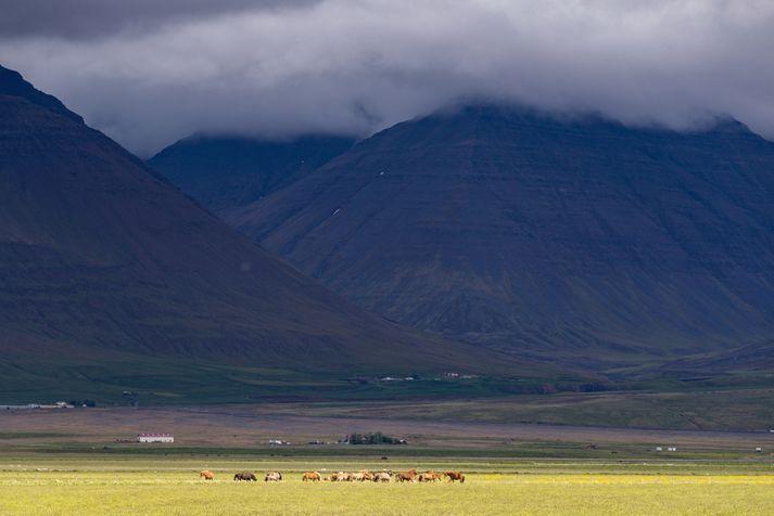 Frá Skagafirði en þar var ferðamaðurinn sem sektaður var í gær á ferð.