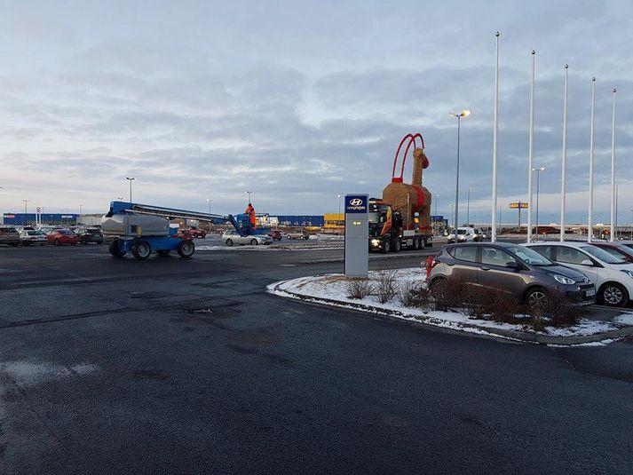 Jólageitin við IKEA var flutt á brott í morgun.
