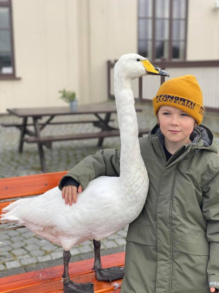 Baltasar and the swan became best buds.