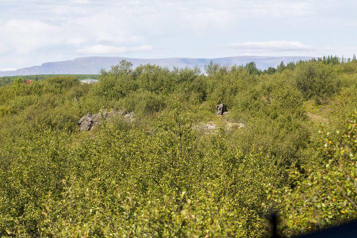 Landgræðsla ríkisins, Hekluskógar og Olís standa að landsátakinu.