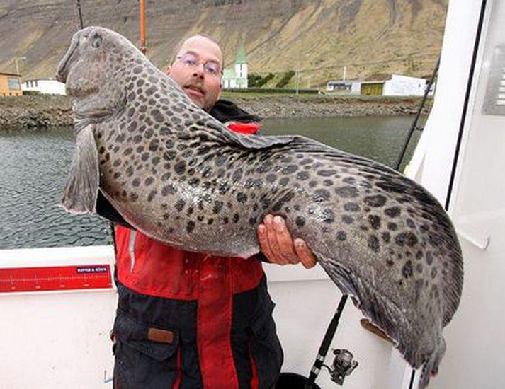 Það veiðast allskona fiskar á sjóstöng. Þessi risahlýri veiddist á sjóstöng á vestfjörðum.