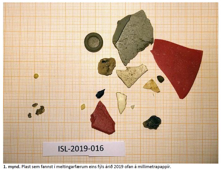 Plast sem fannst í meltingarfærum eins fýls árið 2019.