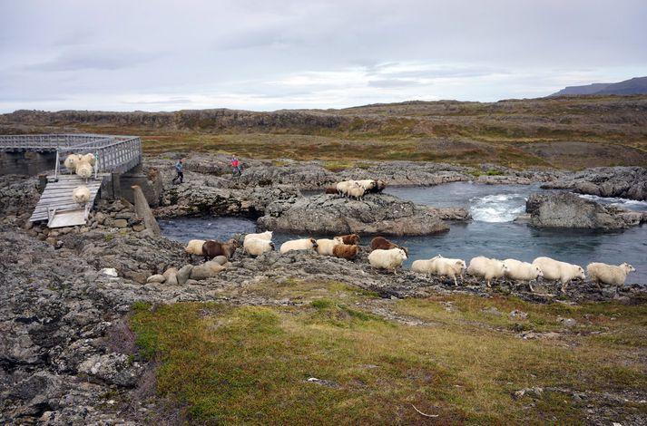 Vesturverk hyggst reisa 55 megavatta virkjun við Hvalá og tengja við rafmagnsnet Vestfjarða.