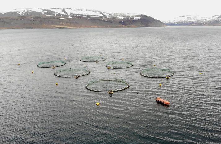 Frá sjókvíum Arnarlax í Arnarfirði.
