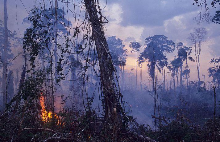 Amazon regnskógurinn í ljósum logum.