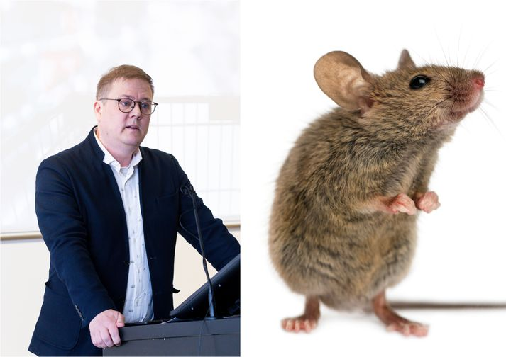 Mýsnar valda nú usla eins og oft áður. Breki Karlsson, formaður Neytendasamtakanna, ætlar að beina málinu til Neytendastofu.