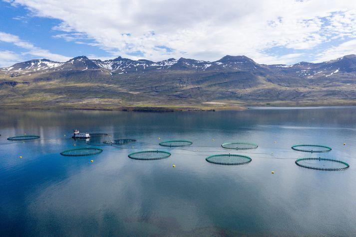 Fiskeldi Austfjarða er með fiskeldi í bæði Berufirði og Fáskrúðsfirði.