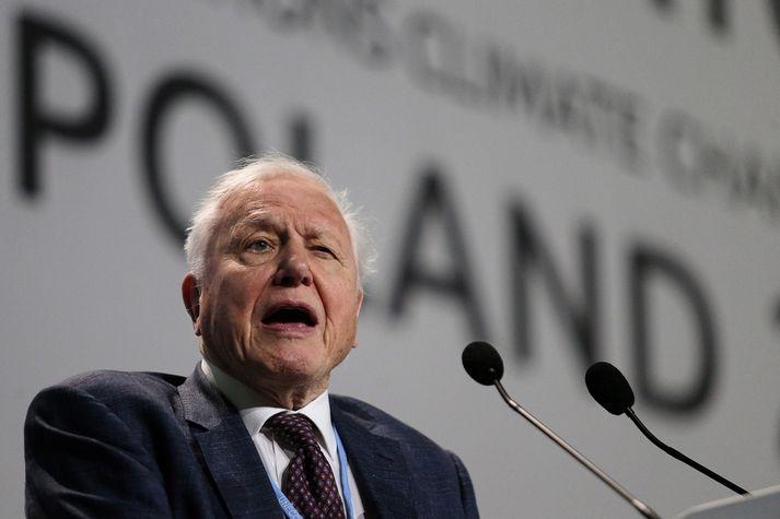 David Attenborough verður 93 ára í næsta mánuði.