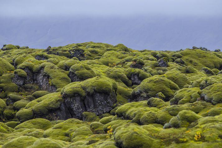 Það mun blása um mosann á Suðausturlandi.