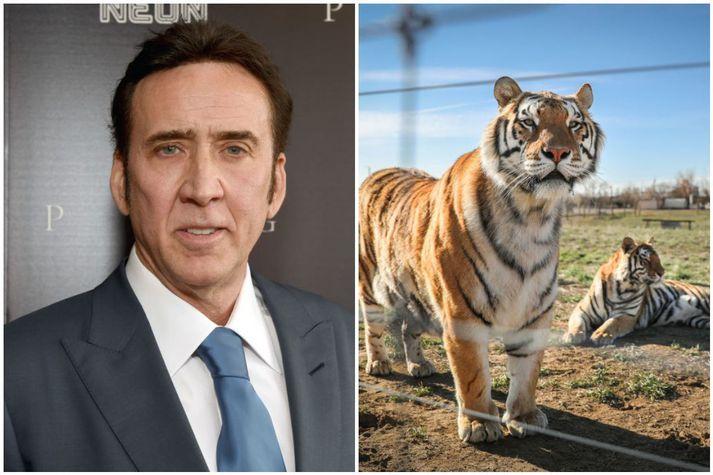 Cage segist ekki munu fara með hlutverk Joe Exotic.