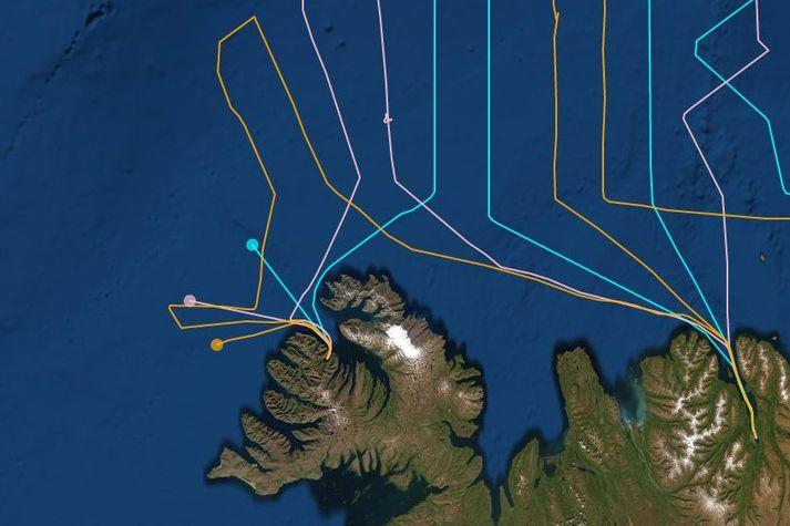 Ferlar skipanna klukkan tíu í morgun. Ljósblár er Árni Friðriksson, bleikur er Hákon og gulur er Polar Amaroq.