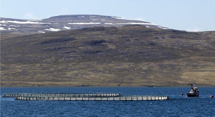 Vistfræðingur kallar eftir auknu eftirliti með fiskeldi.