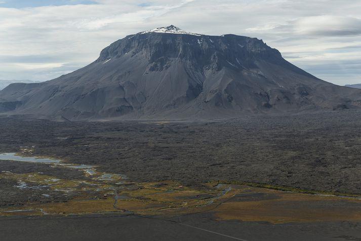 Konan var með stórum hópi þýskra ferðamanna rétt við Herðubreiðarlindir.