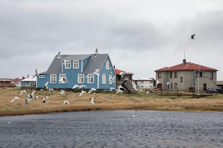 Af 500 greiddum atkvæðum voru 224 seðlar auðir, tæp 45 prósent.