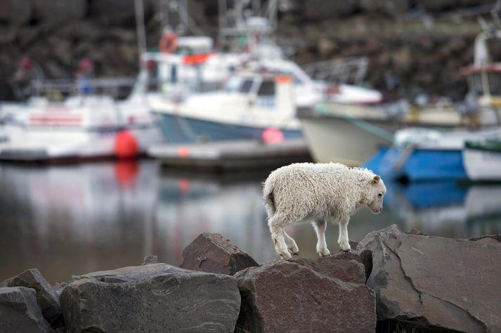 Við höfnina í Norðurfirði í Árneshreppi á Ströndum.