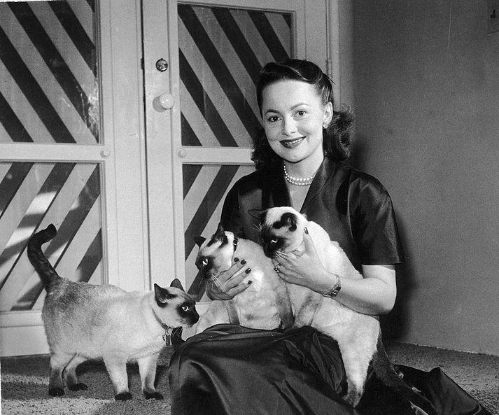 Olivia de Havilland á fimmta áratugnum.