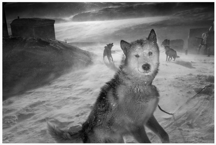 Ragnar Axelsson ljósmyndari hefur náð ótrúlegum myndum í gegnum árin í jökulstormum á Grænlandi.