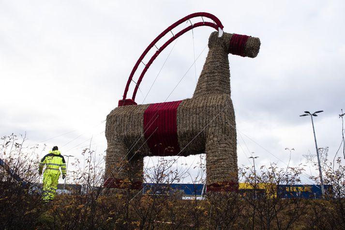 IKEA-geithafurinn komin á lappir í Kauptúni. Fréttablaðið/Sigtryggur ari