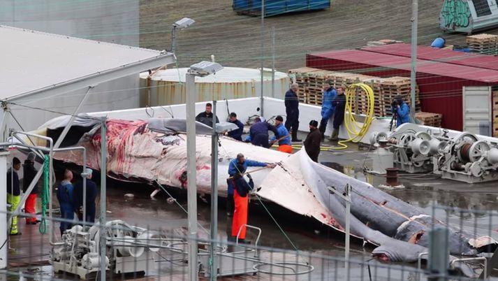 Fulltrúar Sea Shepard voru hér á landi á dögunum að safna myndefni.