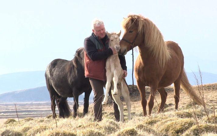 Sigurður Ingi með leirljósa hestfolaldið, sem þau Elsa fengu í vikunni. Gleði og Urður eru með á myndinni.