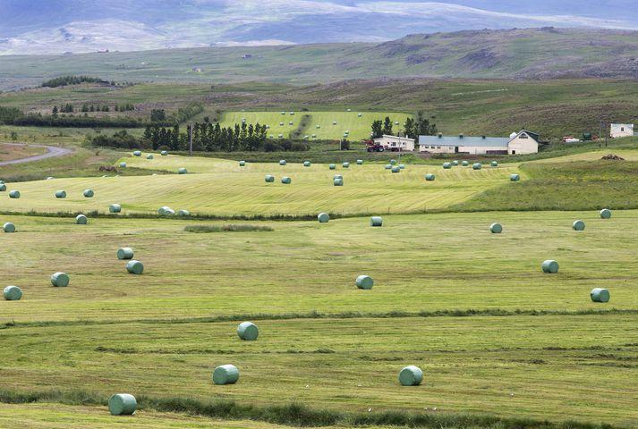 53% þátttakenda sögðust búast við þrengingum í efnahagslífinu næsta árið. 2000 fyrirtæki tóku þátt í könnuninni.