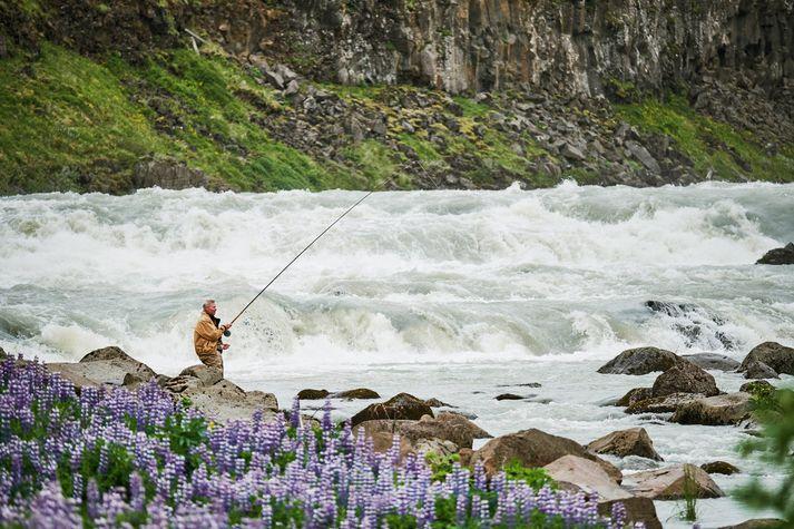 Þjórsá er straumþung og jökullituð og lítur við fyrstu sýn ekki út sem vænleg til laxveiða þar sem hún streymir niður Urriðafoss.