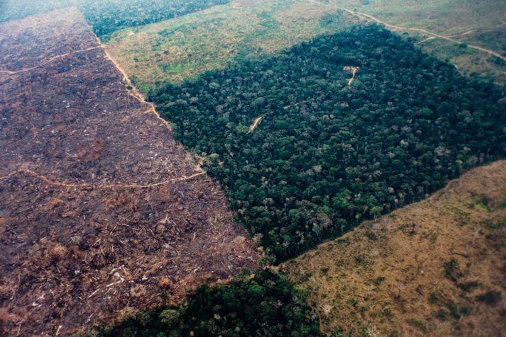 Skógruðningur í Amazon regnskóginum hefur aldrei mælst meiri.