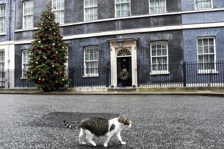 Johnson og starfsfólk Downing-strætis tíu hefur í nógu að snúast þessa dagana. Kötturinn Larry, sem sér um meindýravarnir forsætisráðherraembættisins, kemur þó ekki nærri Brexit-viðræðunum.